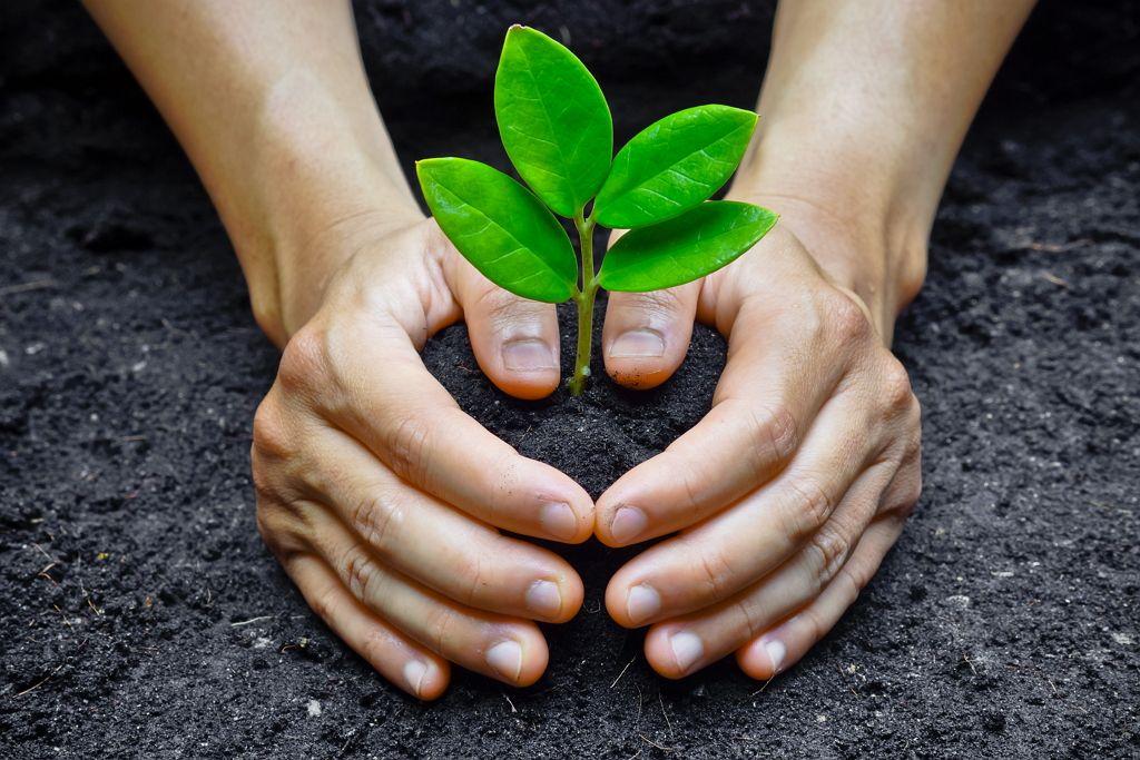 medioambiente-valores-cofrico